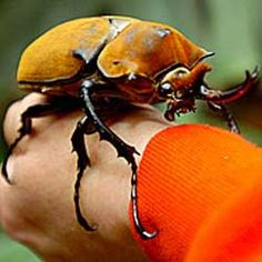 beetle.     If these come to Canada, or near my place....someone shoot me.