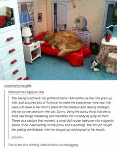 That's a big freaking doll house if a maincoon can snuggle on that sucker Cute Funny Animals, Cute Baby Animals, Funny Cute, Animals And Pets, Cute Cats, Crazy Cat Lady, Crazy Cats, Animal Pictures, Cute Pictures