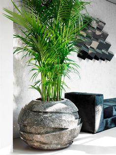 86 easy gardening ideas for your potted plants 20 Cement Planters, Decorative Planters, Outdoor Planters, Big Plants, Green Plants, Potted Plants, Easy Garden, Garden Pots, Pot Jardin