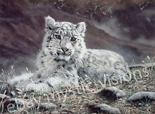 Charles Frace BABY SNOW LEOPARD 9