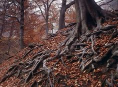 roots + leaves.