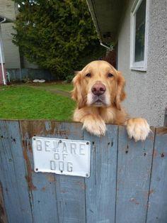 「猛犬注意」の看板05