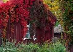 Discover the world through photos. Finland, Tourism, Houses, Autumn, World, House Styles, Places, Photography, Design