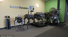 A family affair: Spot (left) with the firm's other robot dogs...
