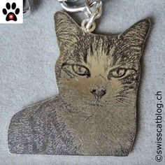 Remembering Angel Loupi | The Swiss Cats Your Pet, Angel, Pets, Animals And Pets, Angels