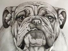 Bulldog pen and watercolour drawing dog by billyboyuk on DeviantArt Bulldog Pics, Bulldog Mascot, Bulldog Puppies, Animal Line Drawings, Bird Drawings, Cute Drawings, Tattoo Bulldog, Bulldog Drawing, Bulldogs
