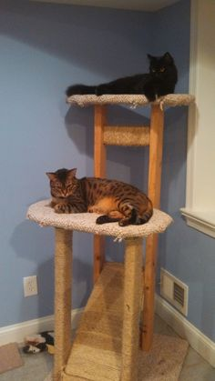 Build your own cat tree diy idea for Build your own cat scratch tower