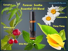 Forever Living Soothe Essential Oil Blend    provides a perfectly balanced blend of nature's purest Wild Mint, Wintergreen, Camphor, Ylang Ylang, and Chamomile, specially selected to penetrate and soothe.  Forever™ Essential Oils Soothe is made from carefully selected pure botanical oils gathered from the best sources throughout the world, including India, China, Madagascar and Egypt.  Forever™ Essential Oils Soothe - 100% Pure. 100% Relaxed.  Order at www.nina49.flp.com