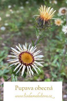 Den, Dandelion, Flowers, Plants, Dandelions, Plant, Taraxacum Officinale, Royal Icing Flowers, Flower