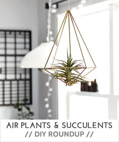 DIY || AIR PLANTS & SUCCULENTS DIY ROUNDUP - Very Shannon