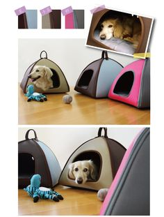 This is actually not okay. Why would you want your dog sleeping in a tent like a homeless person? Ew. This looks like downtown LA.
