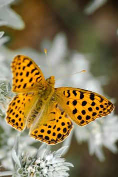 Butterfly pictures, 30 the most beautiful butterflies