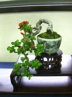 小品盆栽:Mini-Bonsai | 春嘉の盆栽工房
