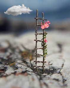 Up the ladders to heavenly flowers Beautiful Nature Wallpaper, Love Wallpaper, Beautiful Images, Beautiful Flowers, Iphone Wallpaper, Desktop Backgrounds, Miniature Photography, Cute Photography, Creative Photography