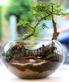 Miniature Garden Terrarium #miniaturegardens