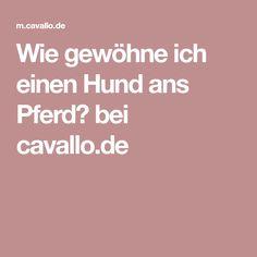 Wie gewöhne ich einen Hund ans Pferd? bei cavallo.de