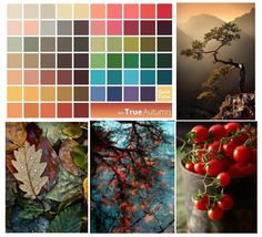 True Autumn is the ochre palette of natural colors. It is associated with the month of October, spices, and oil paints.