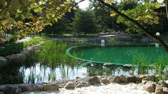 Garden pond and nature pool Swimming Pool Pond, Natural Swimming Ponds, Natural Pond, Pool Water, Water Garden, Garden Ponds, Water Plants, Dream Pools, Cool Pools