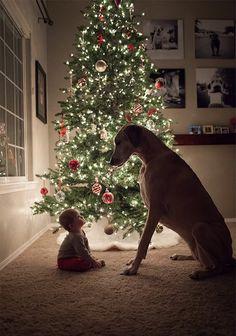 Große Hunde die ein großes Herz für Babys haben