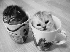 adorable ... just adorable kitties! ( #kitty #kitten #tiny )