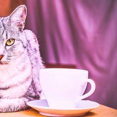 Can Design, Design Art, Canning, Cats, Tableware, Gatos, Dinnerware, Tablewares, Cat
