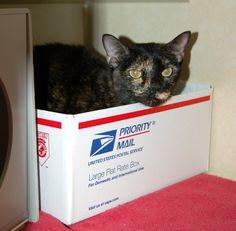 Mumkin loves her box!