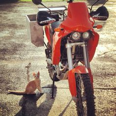 2007 KTM 640 Adventure and a little friend in Potrero