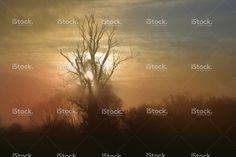Podświetlany Drzewo rano Mgła na łące na wschód słońca