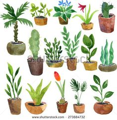 watercolor drawing home plants, hand drawn vector illustration