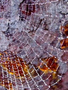 lovely raindrops on the spider web.This says: ragnatela Dew Drops, Rain Drops, Spider Art, Spider Webs, In Natura, Water Droplets, Macro Photography, Levitation Photography, Winter Photography