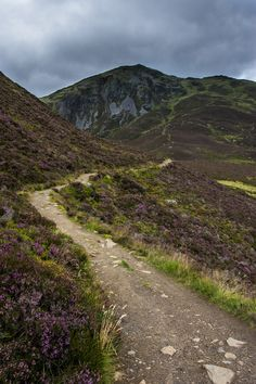 Path to Ben Vrackie - Perthshire, Scotland by Neillwphoto