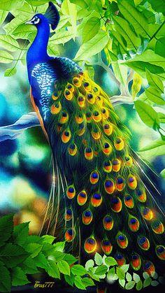 Bird magnificence