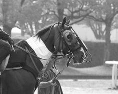 Twitter / aklab0328: 今朝見た馬。内視鏡?を装着して調教に向かうところ。サイボーグ ...