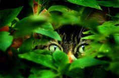 El instinto de supervivencia en el gato