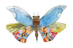 Papillons de collection | Le Cabinet de curiosités   https://www.facebook.com/infoslecabinetdecuriosites N°5 Le Paulus Kleesis