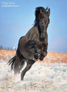 I love horses to bad I live in the O.C. not many here!
