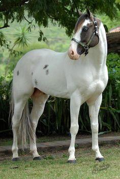 c est la vie — Lz Beautiful Horse Pictures, Most Beautiful Horses, Animals Beautiful, Cute Animals, Wild Animals, Cute Horses, Pretty Horses, Horse Love, Quarter Horses