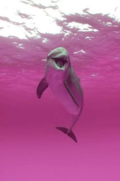Beatiful. Dolphin