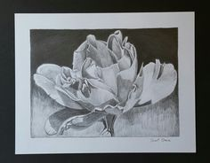 Late Fall Rose-graphite