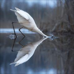En Garde Vogel Als Haustiere Bilder Fotos