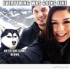 16 Best Siberian Husky Memes of All Time - Dog Red Line Humor Animal, Animal Memes, Funny Animal Pictures, Funny Animals, Cute Animals, Funny Photos, Jokes Photos, Animal Fun, Animals Dog