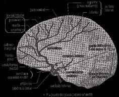 https://www.google.com.br/search?q=artéria cerebral média
