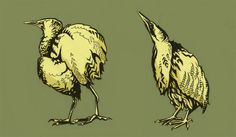 Two Bitterns for the Norfolk Wildlife Trust: Illustration by Beverley Gene Coraldean Nature Reserve, Bird Watching, Norfolk, Trust, Wildlife, Birds, Illustration, Animals, Animales