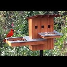 Resultado de imagem para birds house pictures