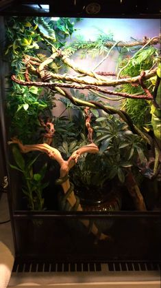terrarium Morning Guys Woke Up 2 Work On My Chameleon Cages And A Got Some Advice From A reptiles Advice Cages Chameleon guys Morning reptile enclosure terrarium Woke Work Reptile Habitat, Reptile Room, Reptile Cage, Chameleon Care, Veiled Chameleon, Gecko Vivarium, Gecko Terrarium, Chameleon Enclosure, Reptile Enclosure