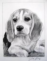 Ähnliches Foto #beagle