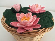 La Ninfea , un meraviglioso fiore acquatico  che con la sua presenza riesce a trasformare qualsiasi pozza d'acqua in un laghetto...
