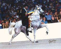 - This is the sire of my new mare, Lady.   Ironworks | The Walking Horse Report