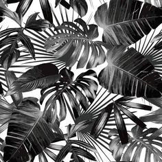 Black & White Tropical Palm Tree Pattern Peel and Stick
