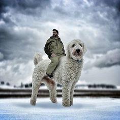 Juji, el perro gigante, es una estrella en Instagram